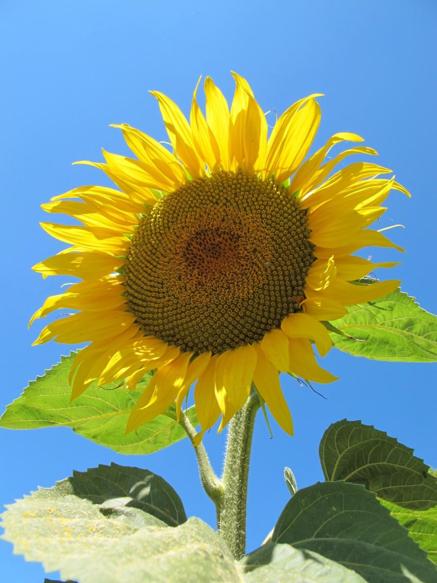 Vacances au soleil dans le sud de la France