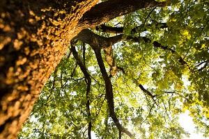 arbre tronc feuille